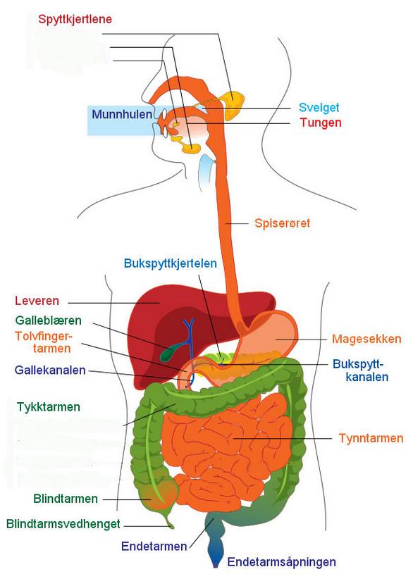 næringsstoffer i kroppen